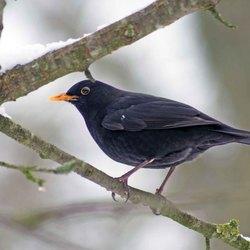 vogels in de tuin 3