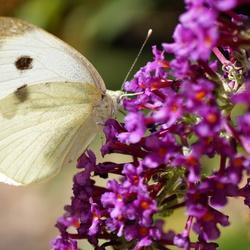 Geluk is als een vlinder