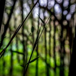 Lensbaby bamboo
