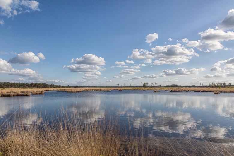 Spiegeling - Stappensven op de Kalmthoutse Heide