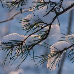 Pasgevallen Sneeuw