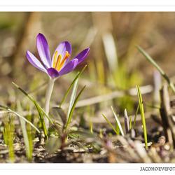 Het echte lentegevoel!