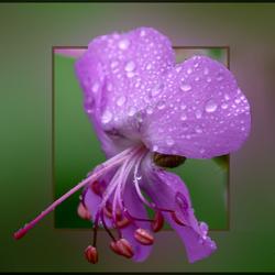 zomaar...een bloempje