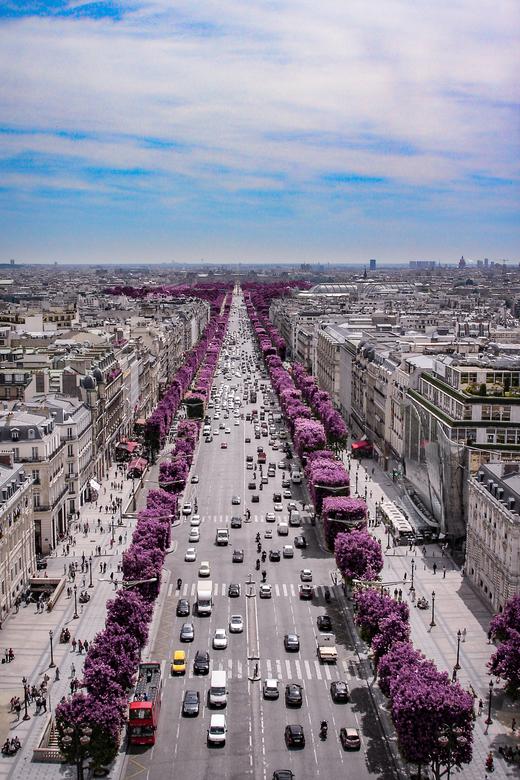 purple haze - Soms heb je van foto's dat ze niet genoeg spreken. Door er net een twist aan te geven krijg je toch een heel ander beeld. De champs