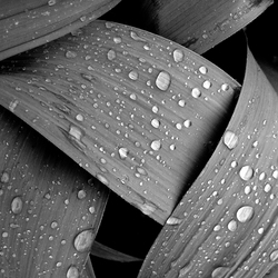 Bladeren met regendruppels