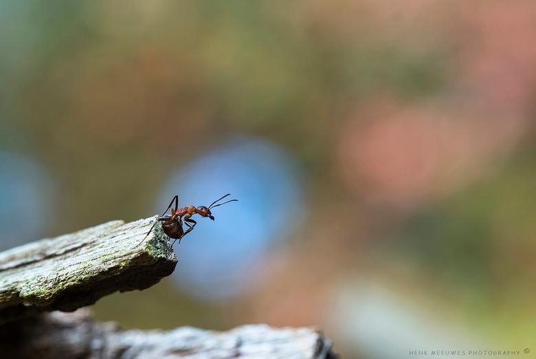 Watching the Zoomers - Aandachtig hield deze mier de zoomers in de gaten die deelname aan de paddenstoelenzoomdag van Daan en Nico.<br /> Dankzij de