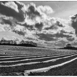 27175_field_landscape_by_patrick_van_vlaenderen