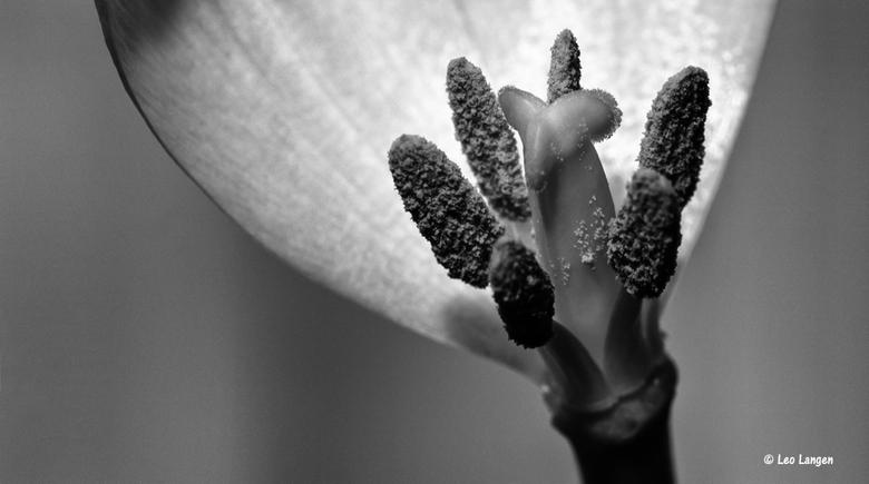 Restje Tulp - Iedereen bedankt voor de leuke reacties op mijn vorige foto.<br /> Momenteel wegens drukte weinig actief op zoom.<br /> Maar...komt go