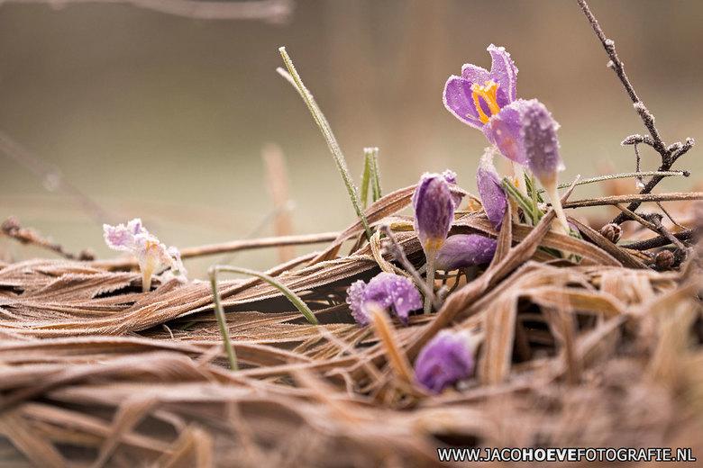 Lentegroet - Wel fris, maar alvast een warme lentegroet.