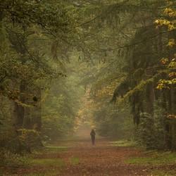 Een wandeling op een mistige ochtend in het Noordbargerbos