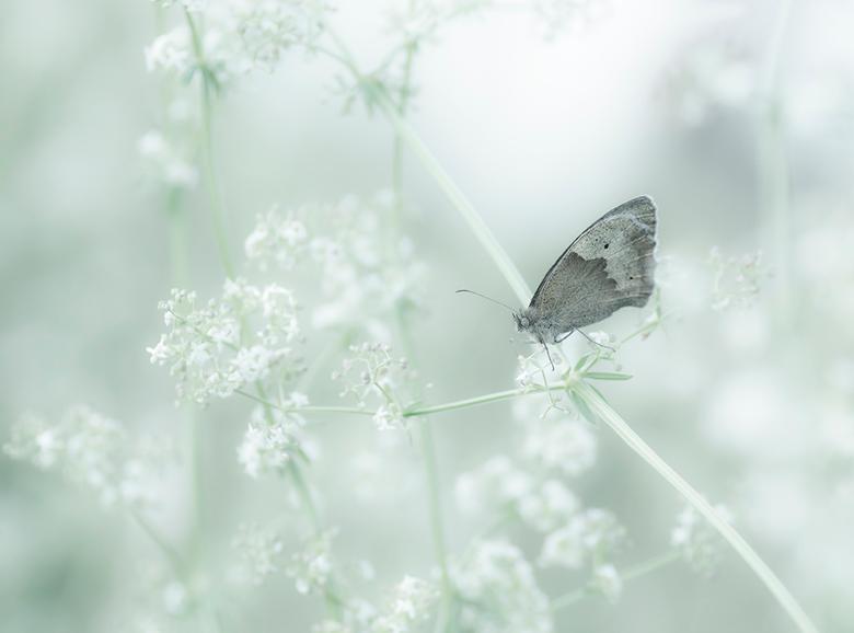 Droomwereld - Jammer dat er bij mij in de buurt zo weinig (speciale) vlinders zitten. Maar als een Zandoogje op zo'n fraai plekje gaat zitten, da