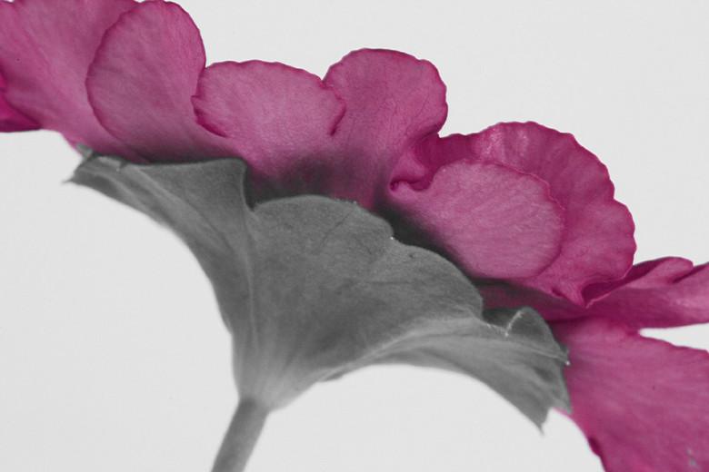 project bloem 10 - project voor mijn zus, die een bloem wil laten drukken op canvas. aan mij de vraag of ik die wilde fotograferen... he wat vervelend