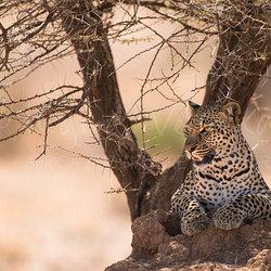 Guarding Samburu