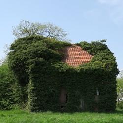 Begroeid huisje