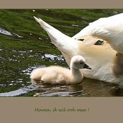 mama, ik wil ook mee!