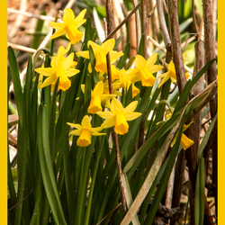 de lente komt eraan