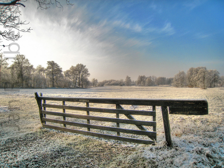 Hek in winters landschap -