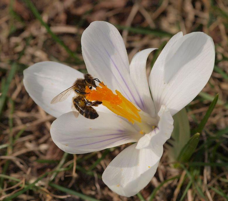 Snoepen... - 2010 had ik nog een eigen tuin waar ik nog veel van kan gebruiken.<br /> Voorjaar en dan kan deze mooi.<br /> <br /> Allen bedankt voo