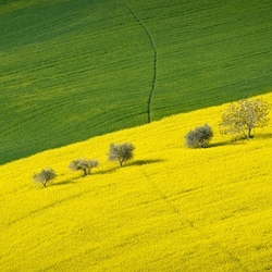 Who's afraid of yellow & greeen