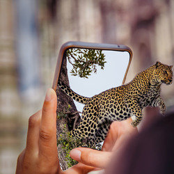 Leopard juimping out of phone