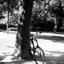 De verloren fiets
