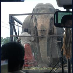 een olifant inhalen,