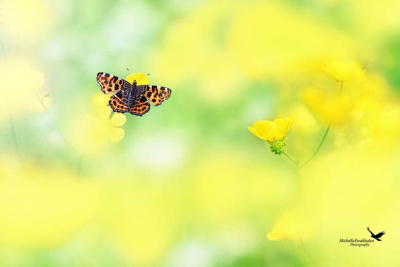 Surrounded by yellow -