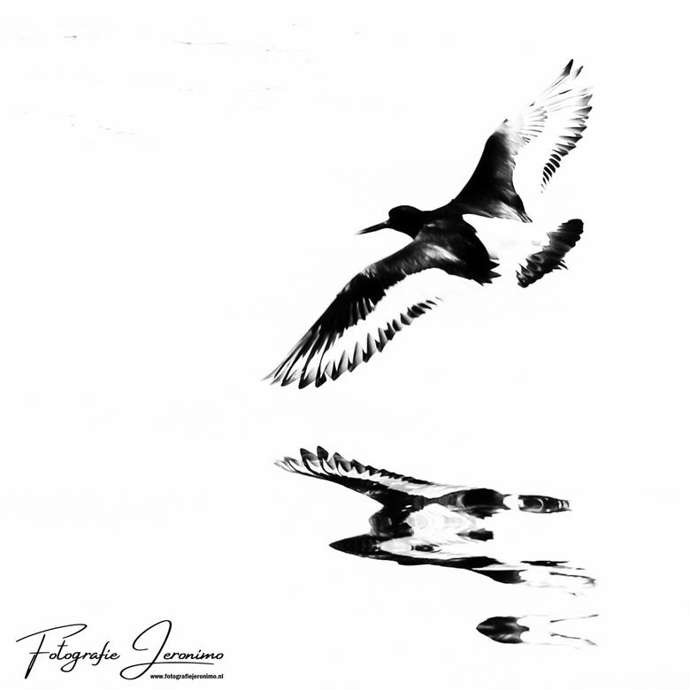 Vliegende scholekster - Persoonlijk hou ik van minimalistische zwart-wit foto's, en vandaar ook dat ik deze, boven de het water vliegende, schole