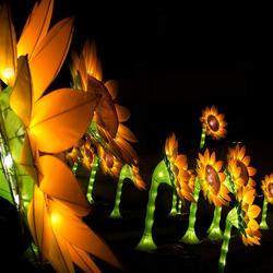 Zonnebloemen voor van Gogh (Glow)