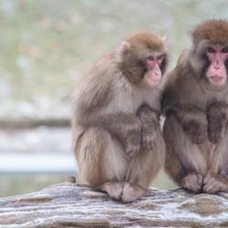 Koude aapjes