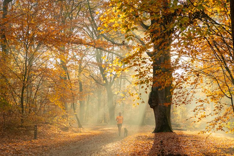 Herfst - Heerlijk die zon bij de mooie herfstkleuren