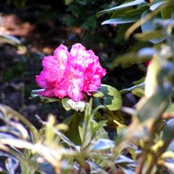 een enkele bloem