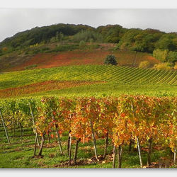 Herbst am Mosel 2
