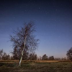 nachtelijk landschap