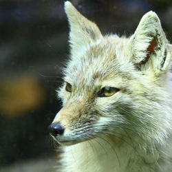 Watching Fox