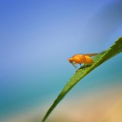 Vrolijk zomers oranje beestje