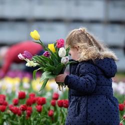 Tulpen voor Mama