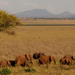Olifanten in Tarangire