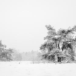 Winterse taferelen