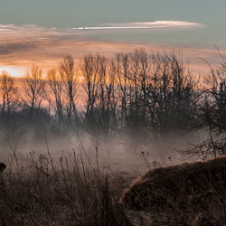 Geuzenwaard bij zonsopkomst