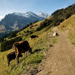 Zwitserser dan Zwitsers.jpg