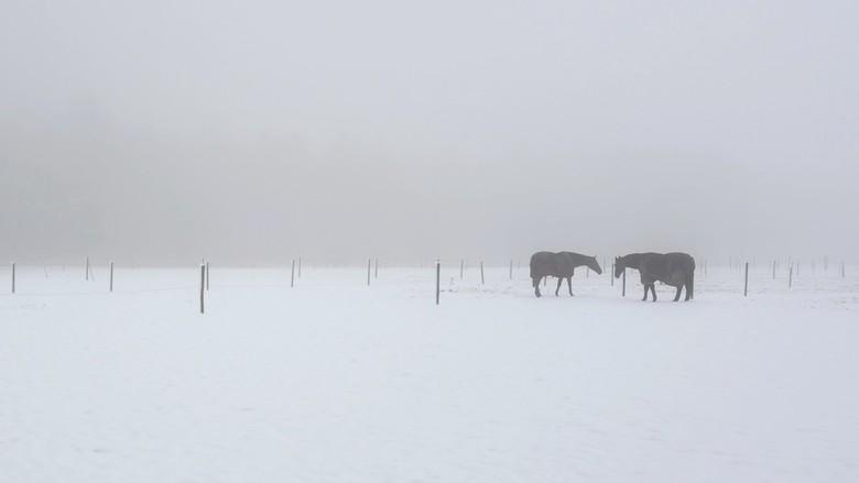 Black &amp; White - De paarden dragen hier een paardendeken tegen de kou. <br /> <br /> Enorm bedankt voor het kijken naar en het reageren op voorga
