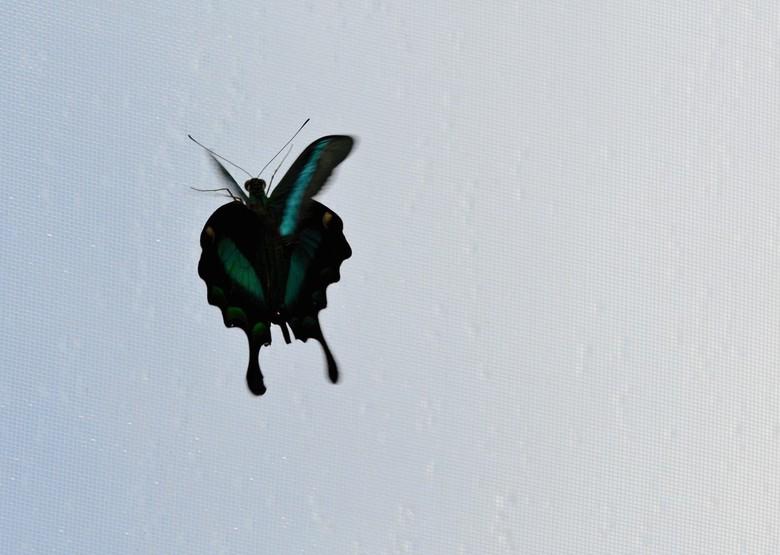 Vliegende vlinder -