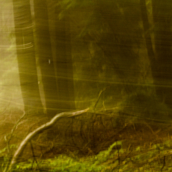 Light flows through the forest