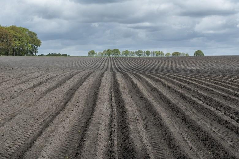Drenthe - Lijnenspel in de Drenthse akkers bij Odoorn. Geen spectaculair weer of zonsondergang, wel een heerlijke wandeling met de honden door het Den