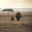 Olifanten - moeder en jong