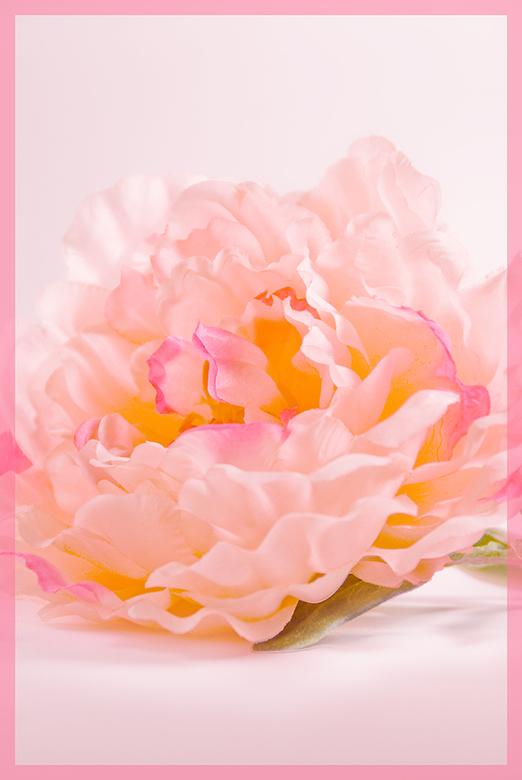 Pink Ribbon - Nog een bijdrage....voor iedereen die met deze afschuwelijke ziekte te maken heeft....