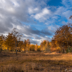 Tevenerheide herfst