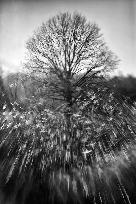 Fairy Tree - Gemaakt met een lensbaby en het ster diafragma uit de creative aperture set.