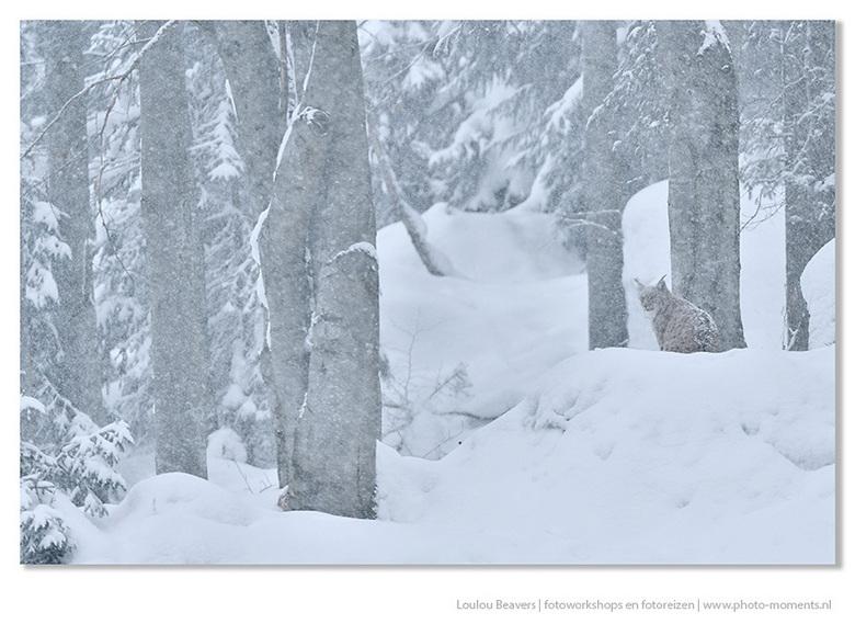 Snowy - Tja, ik hou wel van sneeuw, en ook van niet mooi weer...het leent zich zo goed voor sfeerbeelden.